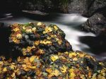 Autumn_Leaf_Covered_Rock%2C_Elk_River%2C_Oregon