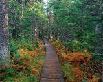 Fundy_National_Park%2C_New_Brunswick