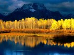 Quaking_Aspen%2C_Mount_Moran%2C_Grand_Tetons%2C_Wyoming