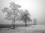 winter (29)