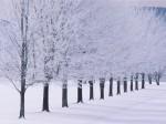winter (34)