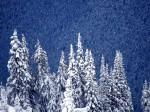 winter (77)