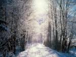 winter (82)