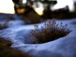 winter (84)