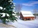 winter (97)
