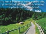 www.crestintotal.ro (1566)