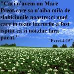 www.crestintotal.ro (526)