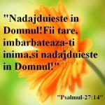 www.crestintotal.ro (582)