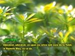 www.crestintotal.ro (954)