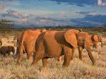 African_Elephants%2C_Samburu_National_Reserve%2C_Kenya