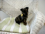 Baby_Puppy_Maggie