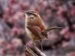 Magnificent_Bird