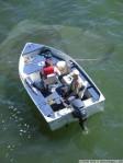 normal_shark_fishing