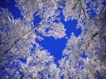 winter (24)