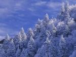 winter (53)