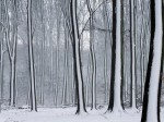 winter (75)