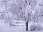 winter (98)